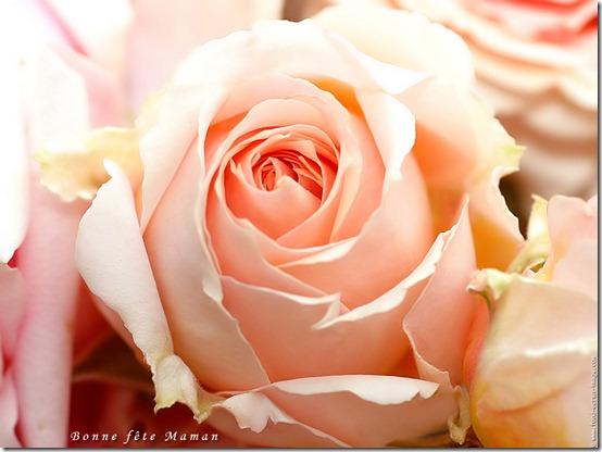Bonne fête des mères 2012