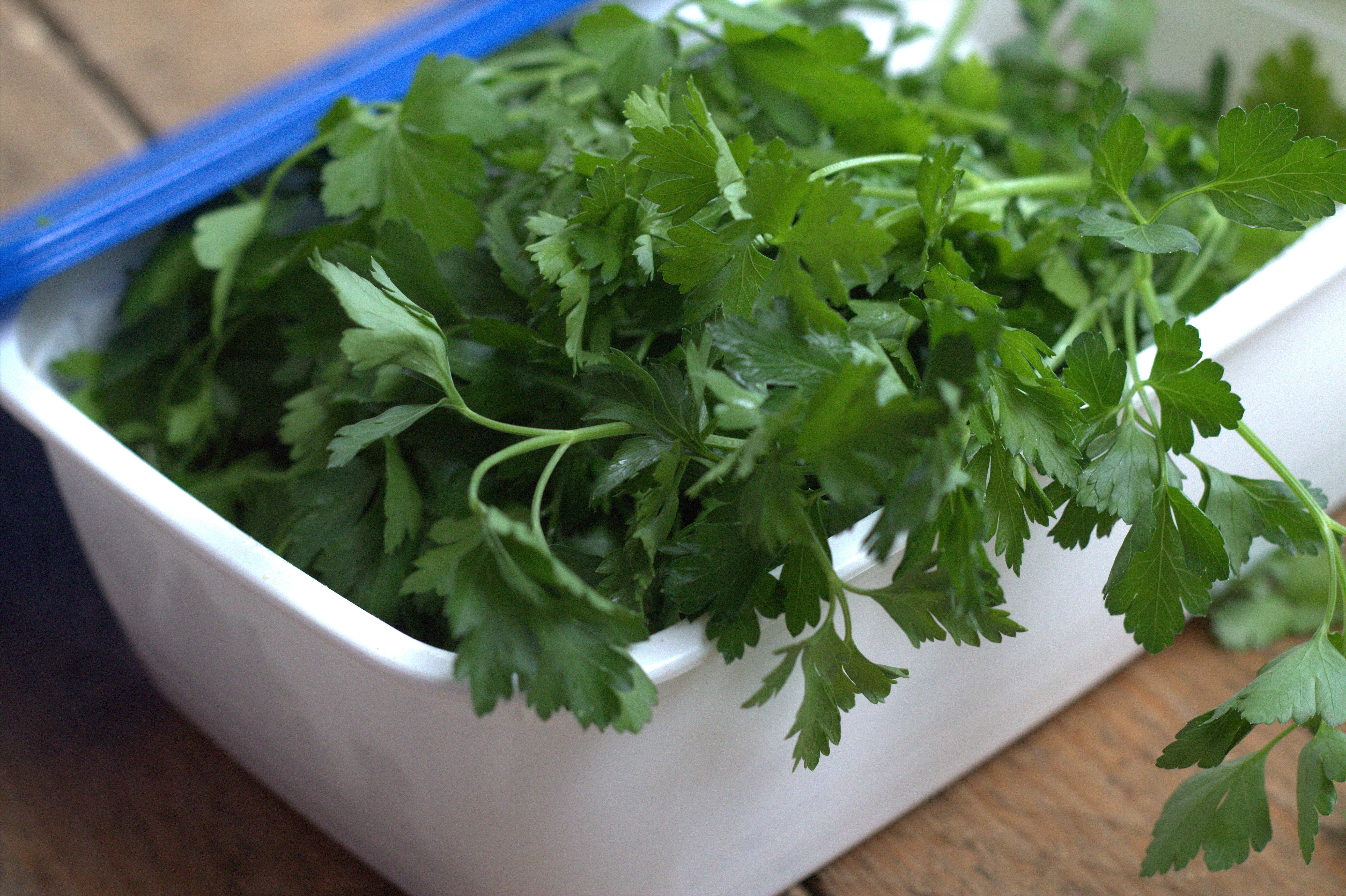 Comment conserver les herbes aromatiques : persil, coriandre...